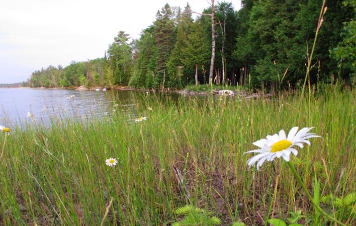 16-lake-daisy